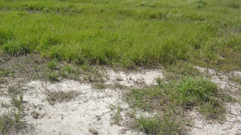 C mo manejar el pastoreo para combatir las limitantes de for Como estan formados los suelos